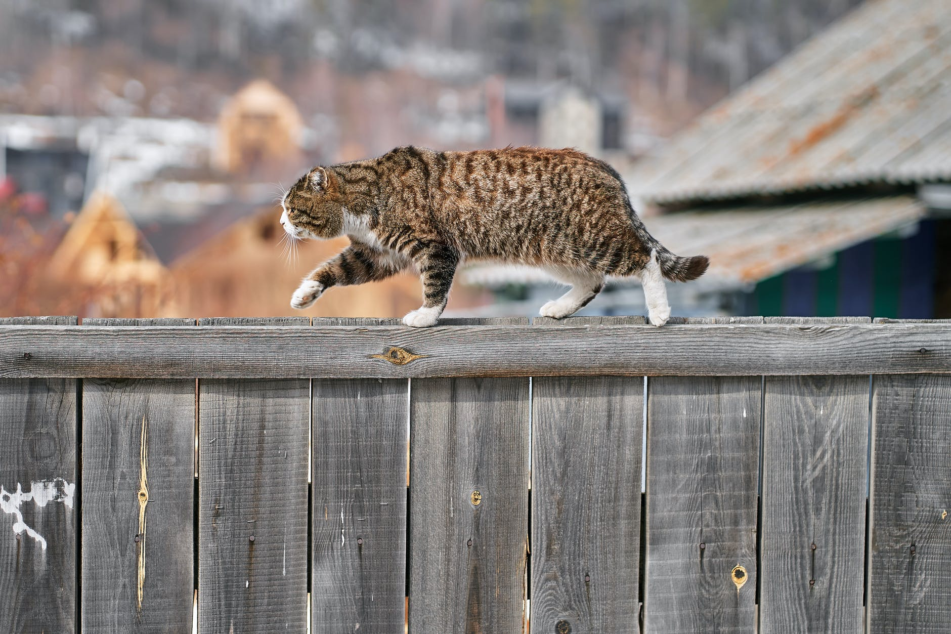 коричневый кот табби на деревянном заборе